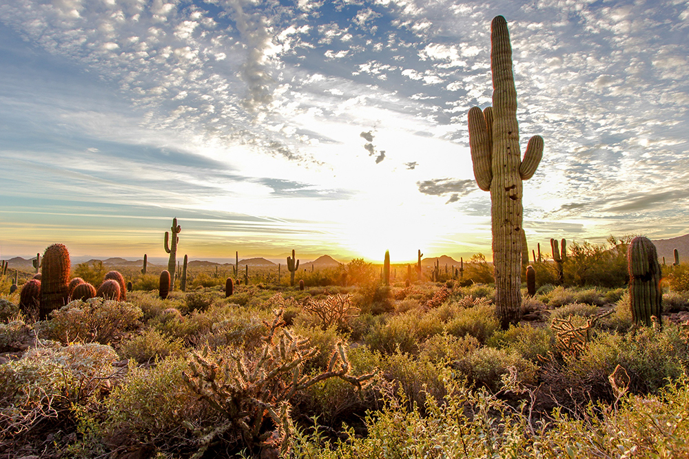 Mesa, AZ - AARP Travel Center