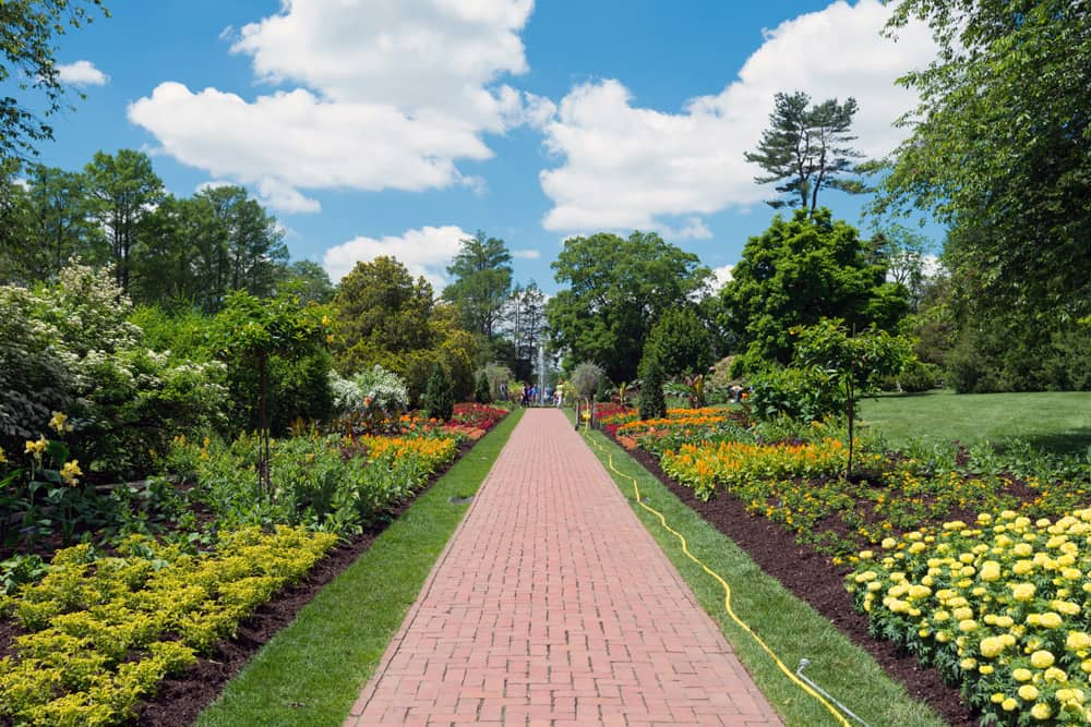 A pathway with manicured lawns filled with flowers on either side at the Longwood Gardens.