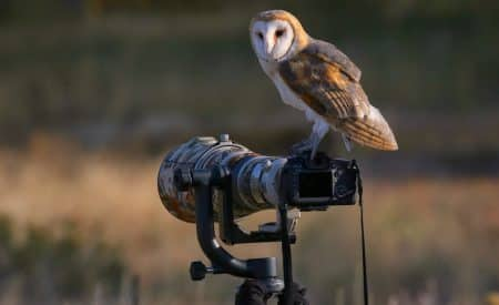 Scenic Bird Watching Destinations Ranked