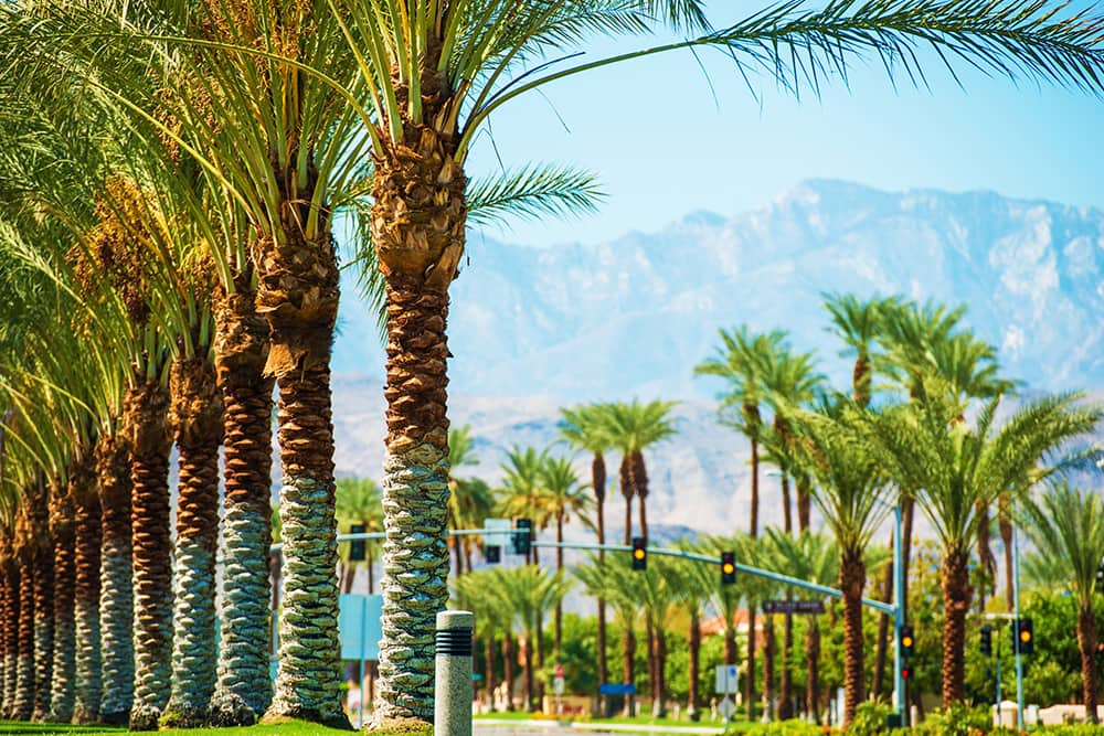 Palm trees in Palm Springs, CA--a top city for single seniors