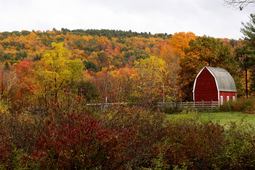 Barn in Connecticut set among fall leaves